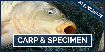 Carp and Specimen